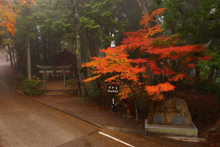 発心門王子 Autumn tints at Hosshinmon-Oji