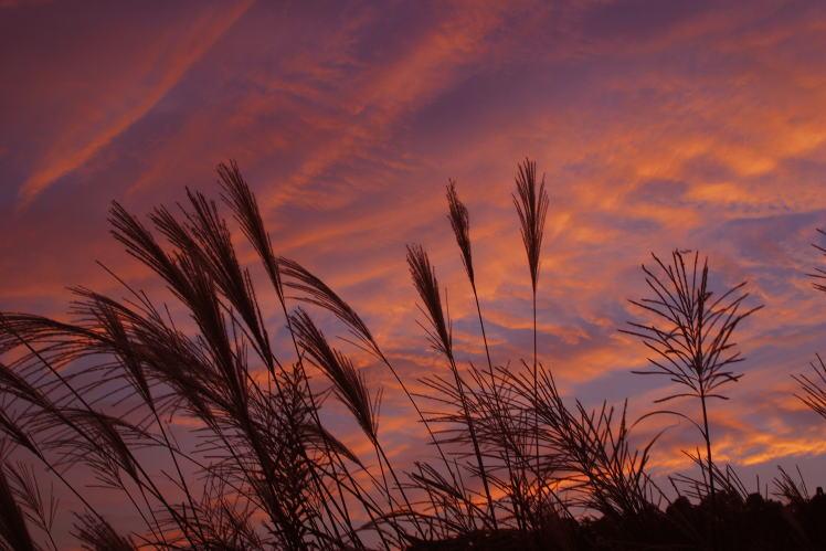 秋の夕暮れ(七越峰付近) Autumn Twilight