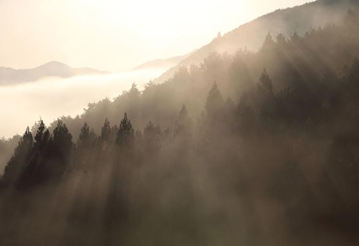 熊野の山 Mountains of Kumano