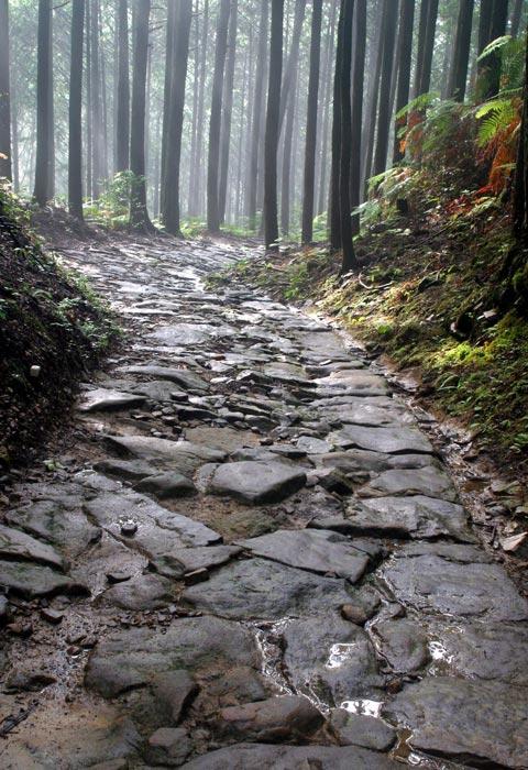 熊野古道・祓戸王子付近の坂 Kumano Kodo (near Haraido-Oji)