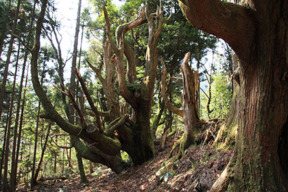 防風林の写真