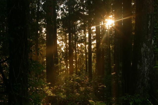 """発心門の美林 """"Beautiful Forest"""" at Hosshinmon"""