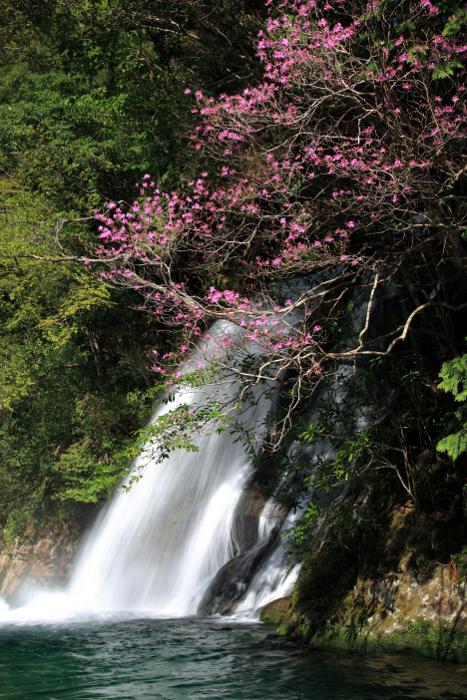 新宮市「宝竜滝」 Horyu-Taki Fall at Shingu City